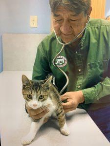 Dr. Loretto examines a cat