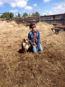 Danielle with George the cattle dog waiting to vaccinate the next calf